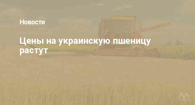 Цены на украинскую пшеницу растут