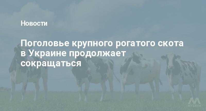 Поголовье крупного рогатого скота в Украине продолжает сокращаться