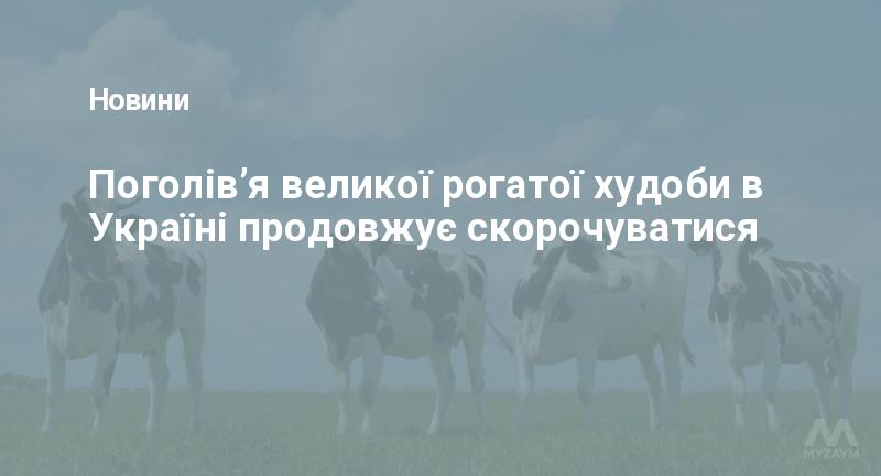 Поголів'я великої рогатої худоби в Україні продовжує скорочуватися