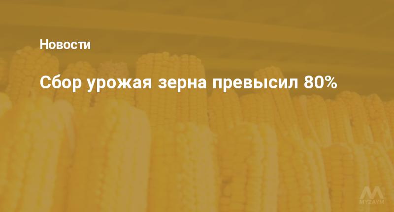 Сбор урожая зерна превысил 80%