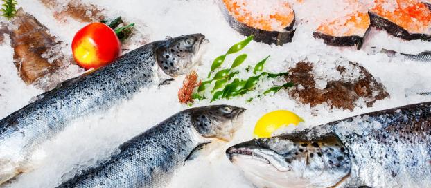 Україна експортувала річний обсяг живої риби