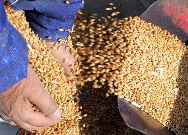 Україна почала експорт зерна нового врожаю