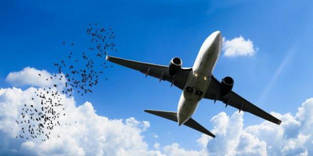 Український туроператор заявив про скасування ще двох авіарейсів з Києва до Єгипту