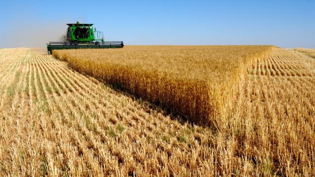 Вибуханка цен: цены на пшеницу в мире достигли максимума за последние несколько сезонов